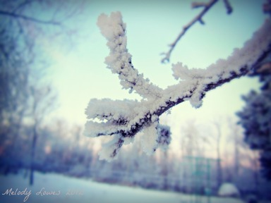 apple tree frost