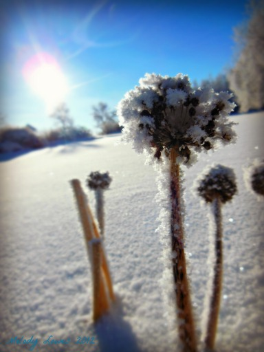 frosty chives