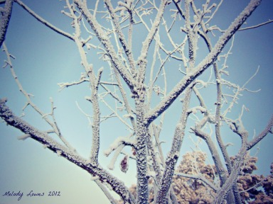 frosty morning tree