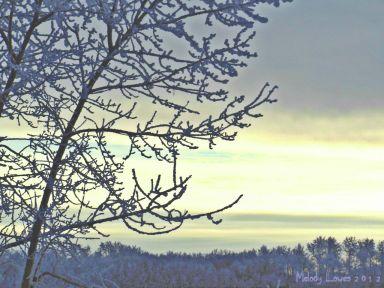 frostypoplars