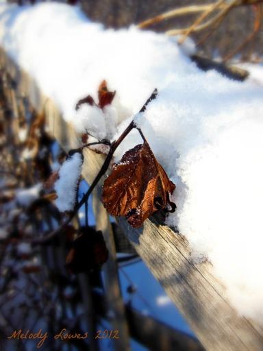grape vine on fence