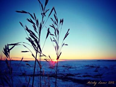 grass seeds sunset