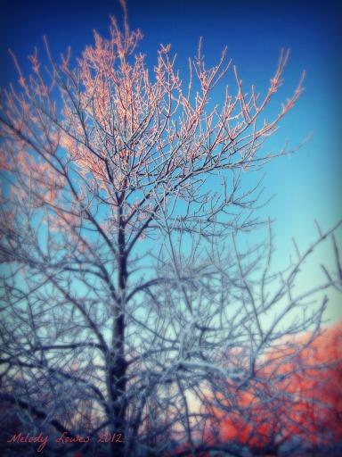 sunrise ash tree