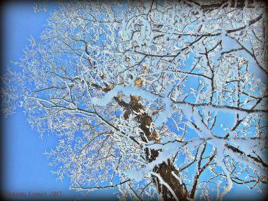frostyashtrees