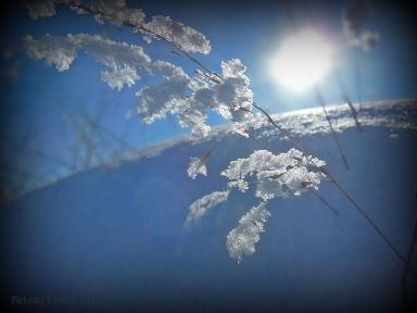 frostedgrass.jpg