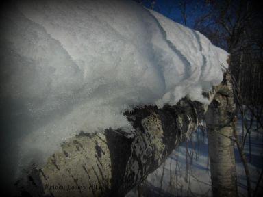 snowlog.jpg