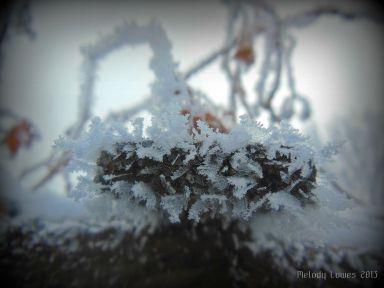 trellisfrost.jpg