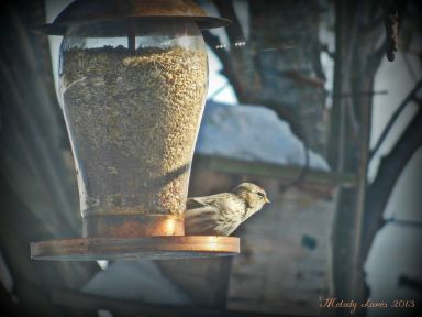 birdfeederbird.jpg
