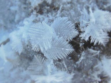 featherfrost.jpg