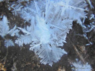 featherfrost2.jpg