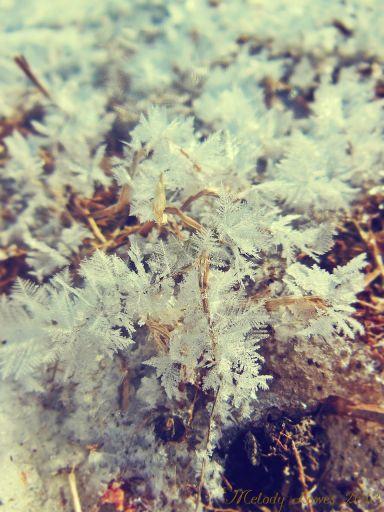 featherfrost5.jpg