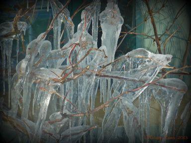icetree.jpg