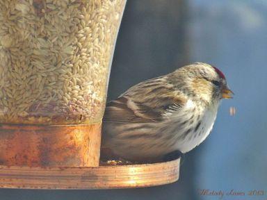 macrobird.jpg