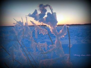 sunsetstubble.jpg