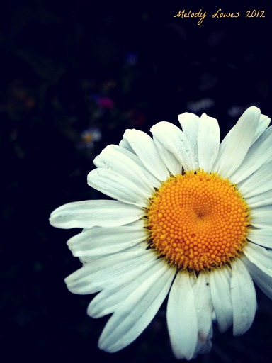 Daisy in the dark