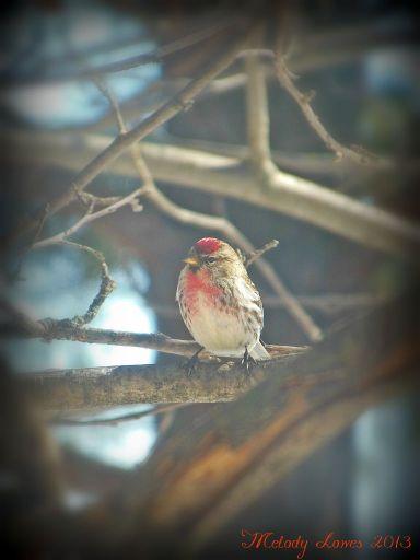 happybird.jpg