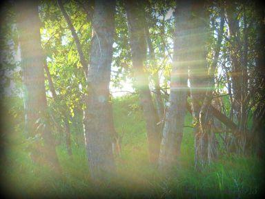 filteredforest.jpg