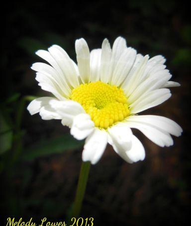 daisy-bright.jpg