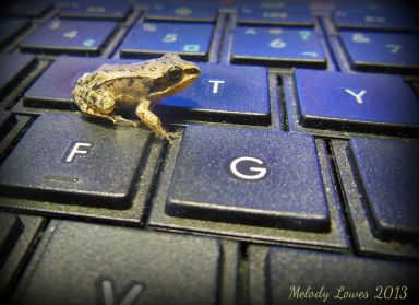 keyboardfrog.jpg