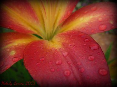 parfaitfrost-rain.jpg