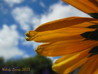 rudbeckia-up.jpg