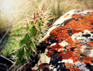 cactus and lichen