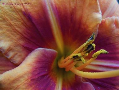 heirloom pollen