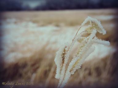 frosty oats