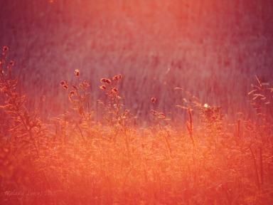 sunset dazzle
