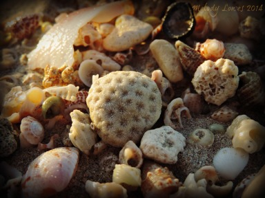 sandy treasures