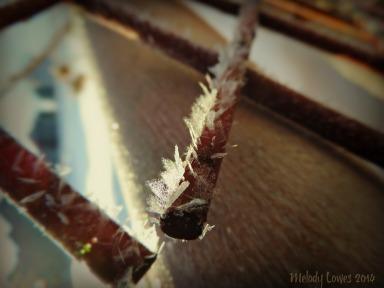 frosty trellis