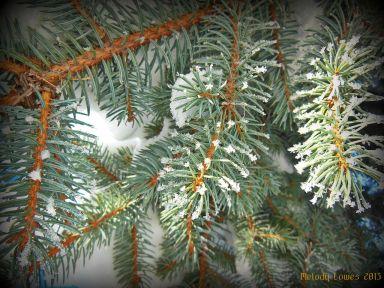 sprucebranch