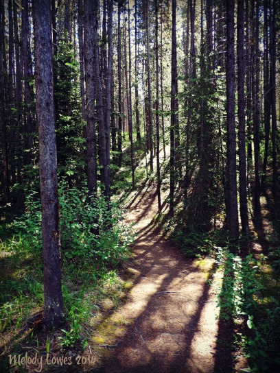 Boulton Bridge trail forest