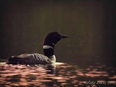 backlit loon