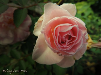 moody blush