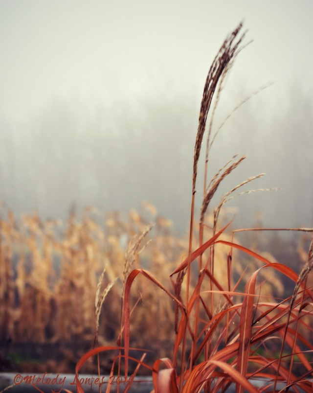 foggy-grasses