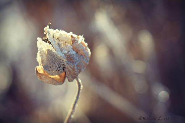 seed-husk