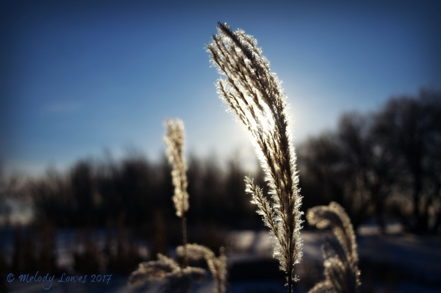 sunlit-grasses