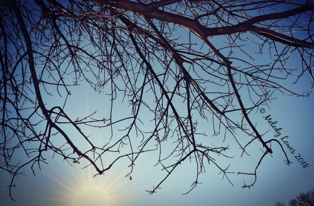 naked branch.jpg